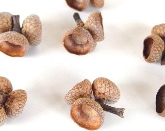10 Triple Acorn Caps, 10 Sets or 30 Red Oak Tops H13
