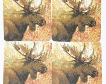 Moose coaster set of 4