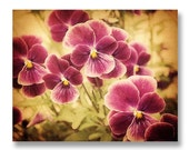 Pansy Photograph, Purple pansies, Vintage Style Purple Pansies, Cottage Chic Flower Decor, Antique Style Purple Pansies, Spring Flowers 8x10