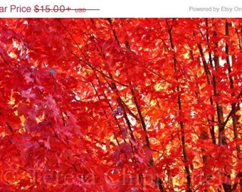 Popular items for fine art fall photo on etsy - Decorative trees with red leaves amazing contrasts ...