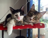 Polka Dots -  Curious Cats Window Perch