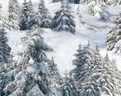 Snowy Mountian Trees - Winter is Coming - Elizabeth Studio - Fat Quarter