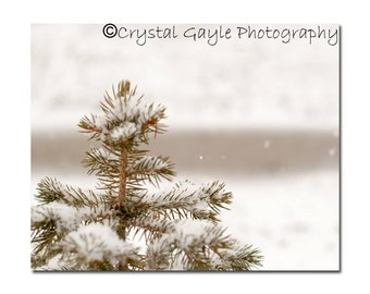 White Photography Print Wonderland  Brown Tree Home Decor Print Made in Canada Wall Decor Tree Frosted Branches