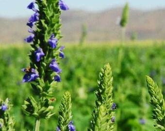 Organic Chia Seeds (Salvia Hispanica)