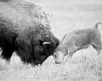 BABY BISON and MOM Play Photo, Black and White Print, Mom and Baby Animal Photograph, Wildlife Photography, Wall Decor, Safari Nursery Art