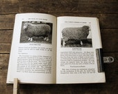 "Antique Farming Textbook: ""The Book of Livestock"", 1920s"
