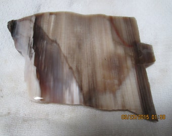 Tan with Dark Brown Petrified Wood Lapidary Slab Free Form Wrap Cut It