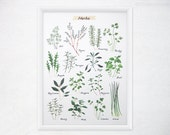 Herbs Kitchen Art - 8x11 Watercolor Culinary Herb Print - Food Poster / Kitchen Decor