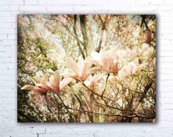 Transcend - PHOTO, magnolia tree, magnolia photography, pink flowers, pastel pink, nursery decor, spring landscape, magnolias