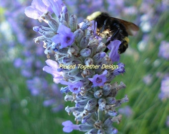 5 x 7 Photograph - Lavender and Bee