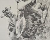 Art Print Sketch of Cows Calves by Bob Dale 1972 Vintage Art