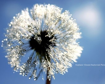 Spring, Dandelion, Blue, White, Fairy Tail, Bokeh, Summer, Round, Silver, Nature Photography