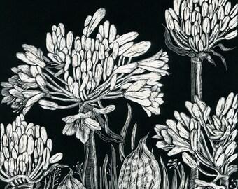 Art card of Agapanthus Lilies from SCraperboard original