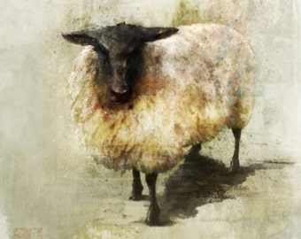 Black Sheep 01: Giclee Fine Art Print 13X19