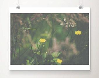 yellow buttercup photograph yellow flower photograph nature photography wild flower print green grass photograph woodland decor