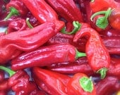 CLEARANCE SALE! Jimmy Nardello Sweetest of All Red Peppers Rare Heirloom Seeds