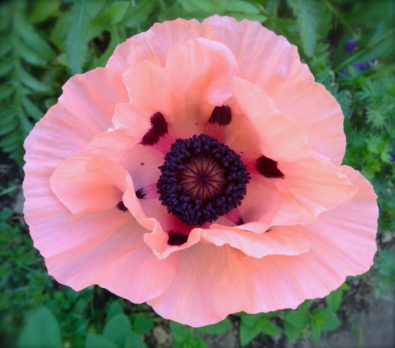 Silk Flower Arrangements  Designer quality affordable