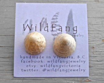 PEARLIZED TROCHUS SHELLS Natural Shell Stud Earrings