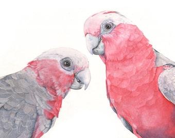 Galahs print of watercolor painting  G2315 - A4 size print, bird art, wall art, home decor, australian bird art