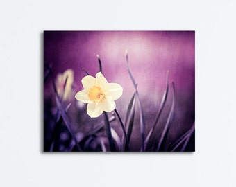 "Purple Nature Canvas, dark plum yellow flower photography violet wall art daffodil gallery wrap nature picture floral print, ""Amethyst"""