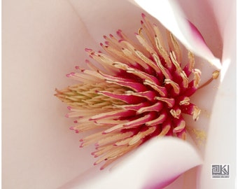 Pink Magnolia, Nature photography, Pink Flower print, Macro photography, Dining room wall art, Mothers day gift, Magnolia tree, Spring home