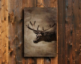 Elk - Elk photography - Elk art - Elk decor - Rustic decor - Elk rustic art - Elk canvas - Animal photography