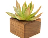 Magnetic Walnut Wood Planter