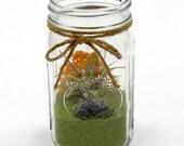 mason jar terrarium garden