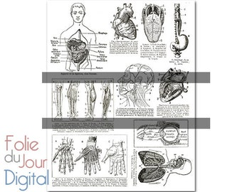 "Digital clip art medical illustrations - 8.5 x 11"" - Instant Download"