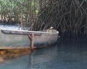 Mangrove Boat | Mangroves...
