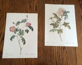 Pair- Vintage Rose Book Plates/ Color Engravings/ Lithographs- Redoute's Roses