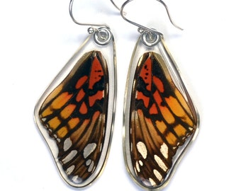 Real Mexican Silverspot Butterfly (Dione moneta) (top/fore wings) earrings