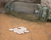 Beach Decor Small  Sand Dollars 12 pcs for Nautical Decor, Beach Weddings or Crafts - 1/2 inch Sand Dollars