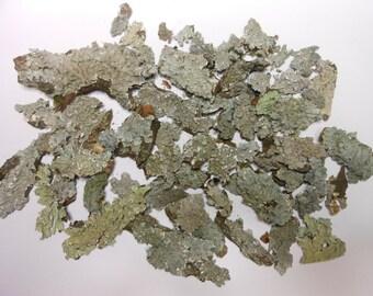 Grey/White Lichen-Terrarium/Crafting Supplies- 1 Oz