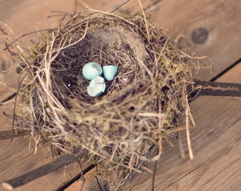 Nature Photography - Whimsical Photography - Nest Photograph - Nursery - Nest - Fine Art Photography Print - Neutral Brown Home Decor