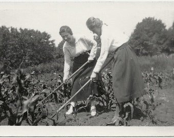 Old Photo Women Farming Corn 1920s Photograph snapshot vintage