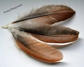 Feathers 3-5 inches Brown with black side 16 count