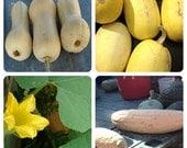 Heirloom Winter Squash  Collection Non GMO