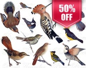 BIRDS clipart collage Instant download, digital images, hoopoe tit titmouse nightingale, blue brown SALE