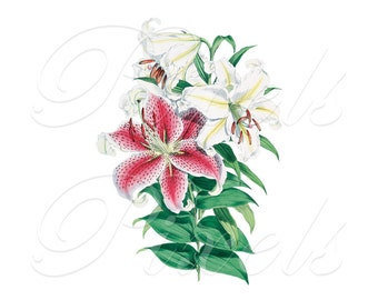 LILIES bouquet, Instant Download, white and pink flowers, summer wedding clipart, JPG and PNG, large image, botanical illustration 409