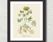 Vintage Floral Study No. 1 Botanical Canvas Art Print - Wall Decor - Multiple Sizes Starting at USD 15.00+