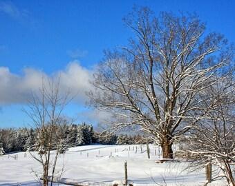 Snow Tree Winter Scenery Art,  Evergreen Trees, Winter scenery photography, Canada Trees and , Snow scenery Art Print, Tree Photograph