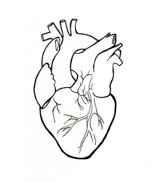 Line Drawing Human : Human heart embroidery anatomical line art simple