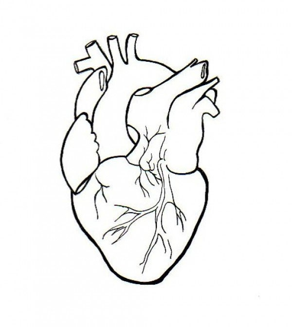 human heart embroidery anatomical line art simple embroidery, Human body