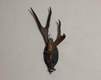 Mule Deer Antler Wall Sconce