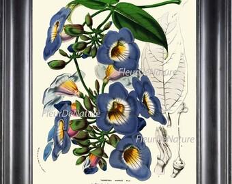BOTANICAL PRINT HOUTTE  Art Print 22 Beautiful Blue Sky Vine Plant Antique Flowers Spring Summer Garden Home Wall Room Decor to Frame