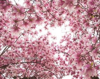 Cherry Blossom Photography Nature Photography Pink Flower Photos Peach Home Decor Spring Flowers Wall Decor Washington DC Print Flowers