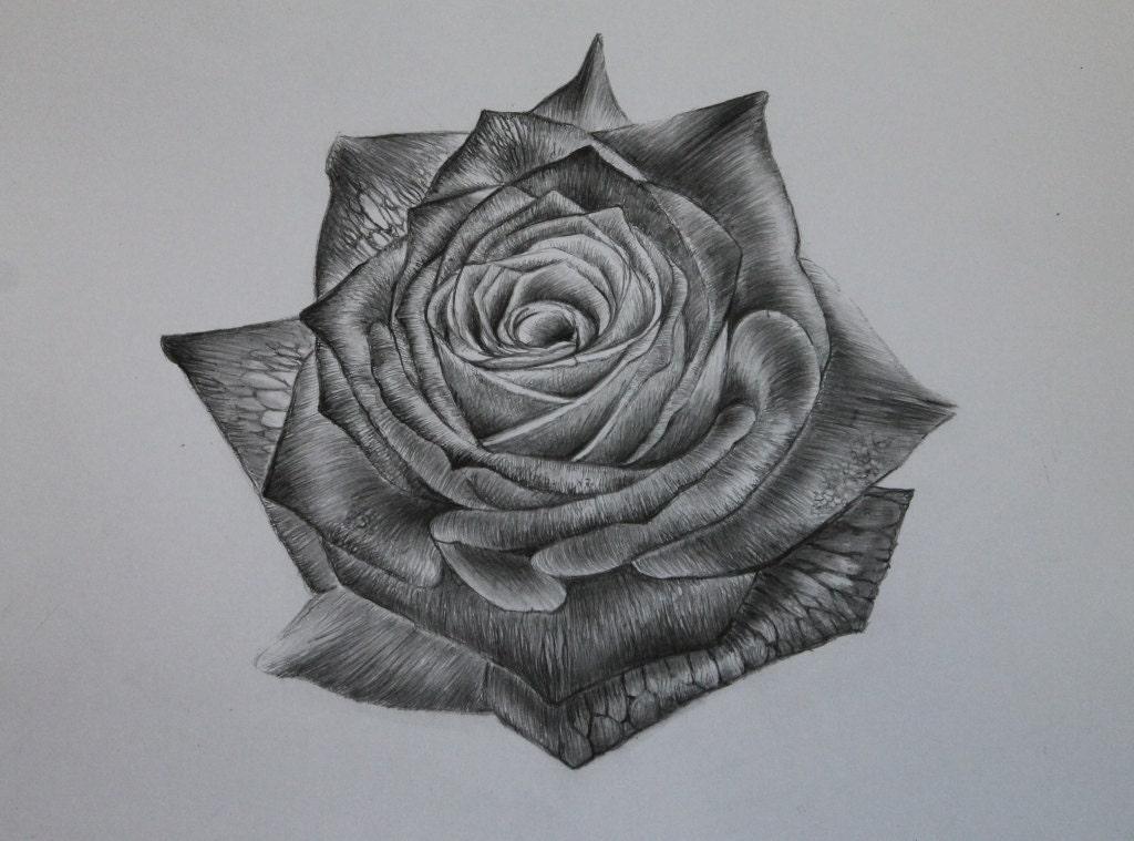 einzelne rose original bleistift bleistift zeichnung. Black Bedroom Furniture Sets. Home Design Ideas