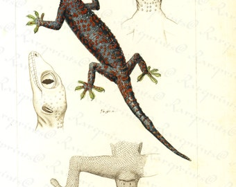 Original Antique Hand Colored Reptiles engraving from 1829 --