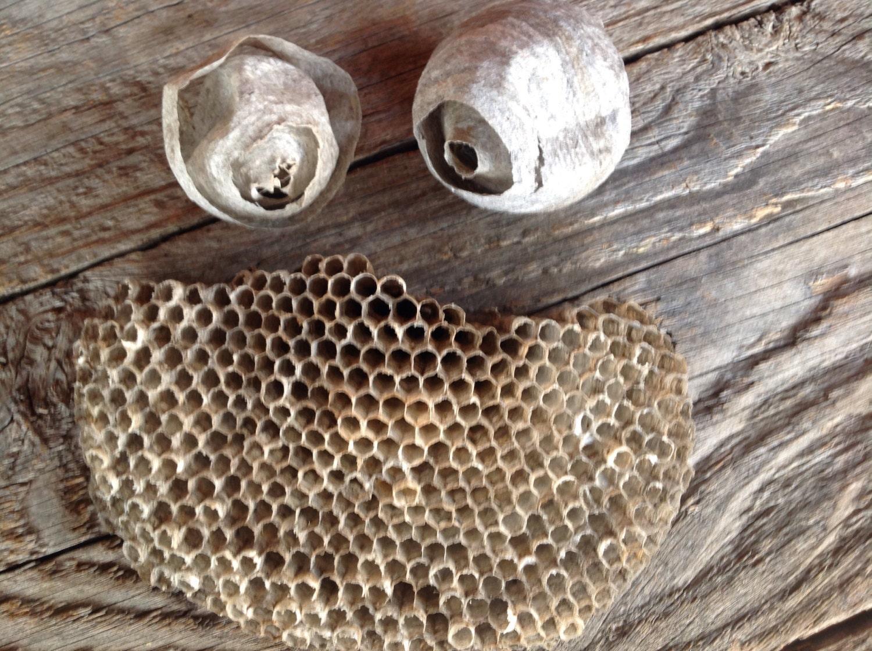 ensemble de 3 hornet nid gu pe papier nid abeille ruche nid. Black Bedroom Furniture Sets. Home Design Ideas